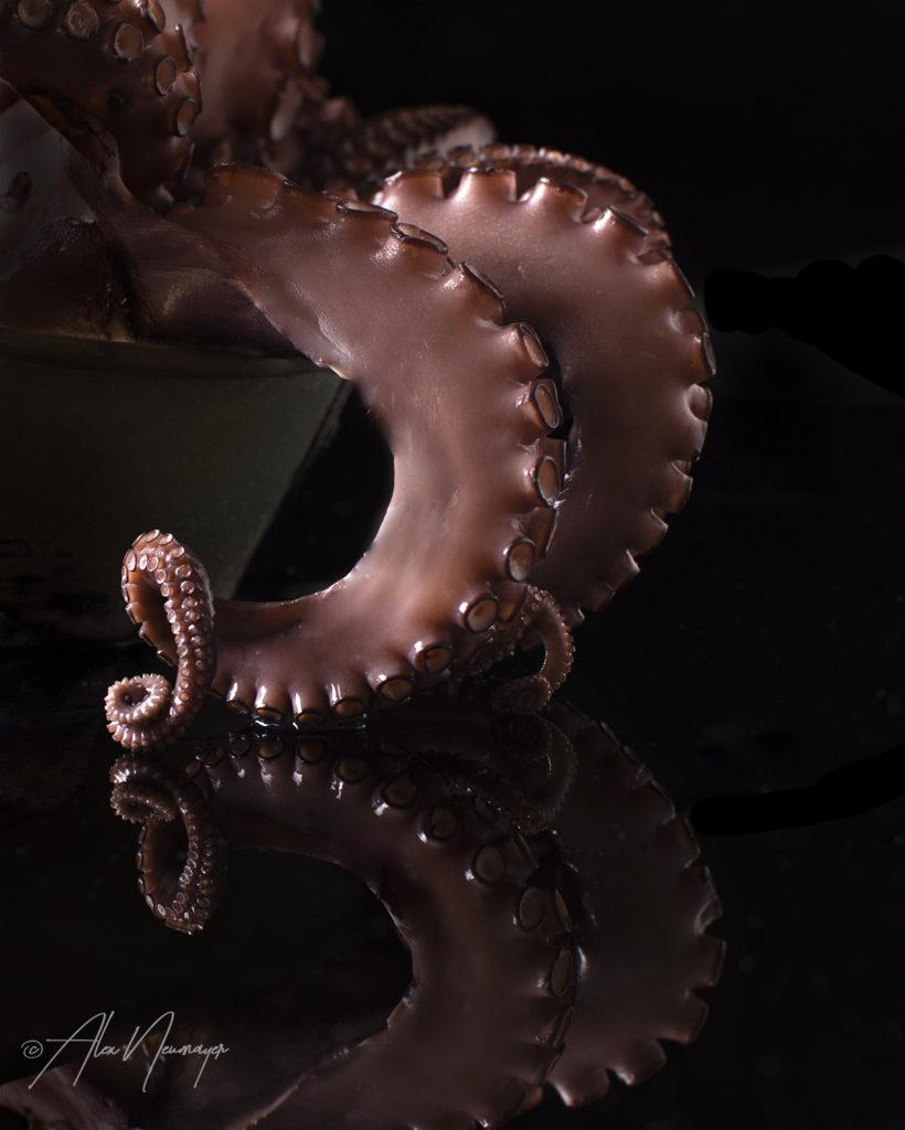 octopus DSC5396