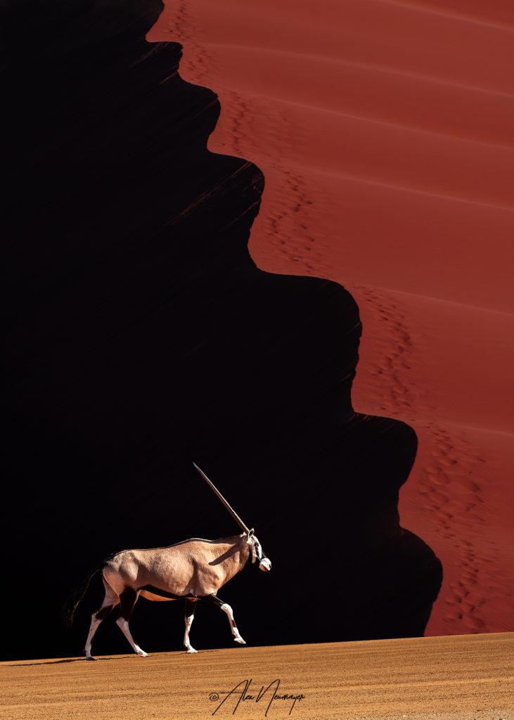 rote düne mit oryx