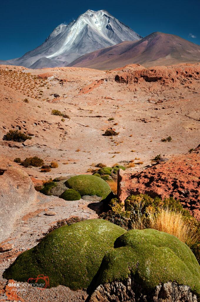 Atacama DSC_0513