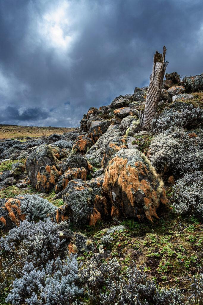 bale mountains park_DSC9603