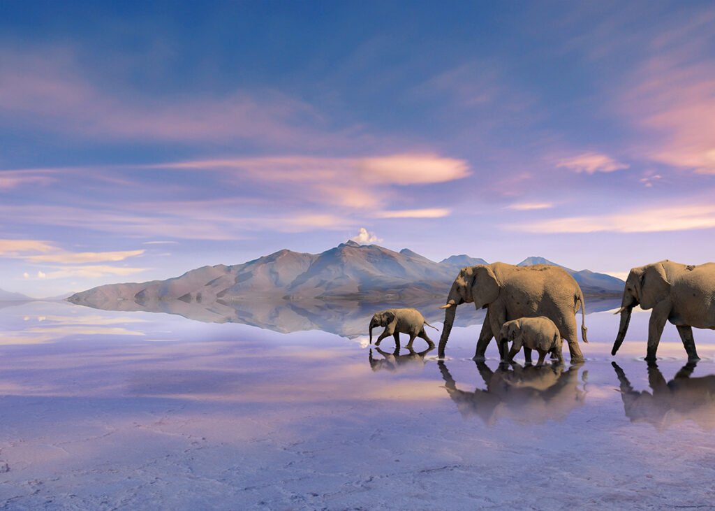 elefanten gruppe
